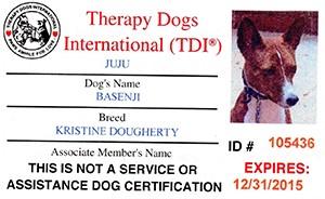basenji_therapy_dog